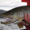Łowienie po zejściu lodu - ostatni post przez krzysiek