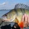 Jechał chłopak na ryby ... - ostatni post przez marianosum