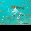 """[Artykuł] """"Taaaka Ryba"""" – Skompletujmy Sprzęt Jerkowy – Multiplikator - ostatni post przez patryk123"""