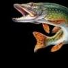GoFish Cam, alternatywa, która zniszczy WaterWolfa? - ostatni post przez Rraptor