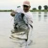 CatCHFish Lures - ostatni post przez CatchFish Krupa